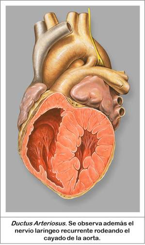 Patrick J. Lynch, medical illustrator; C. Carl Jaffe, MD, cardiologist.